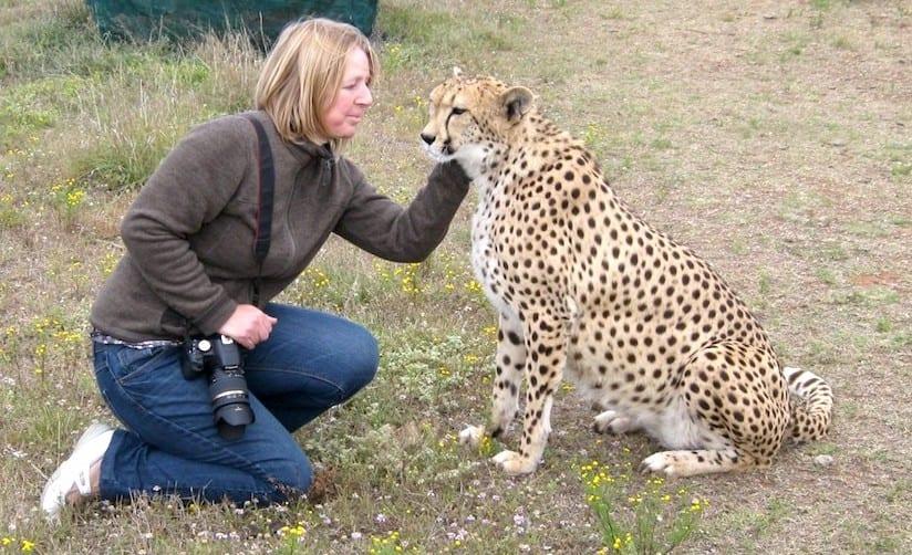 Geparden in Reichweite 4