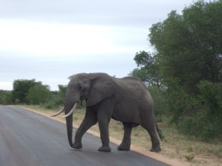 South Africa 7