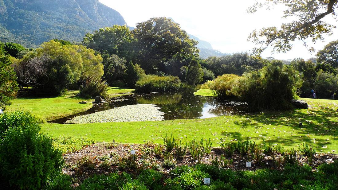 Entdecken Sie Kapstadts Blumenreich im Botanischen Garten Kirstenbosch 3
