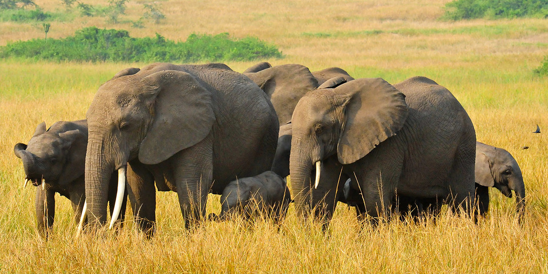 Uganda - Safari Queen Elizabeth Nationalpark & Familienaufenthalt 12