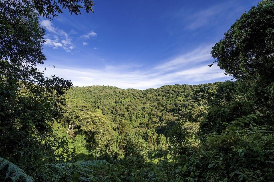 Uganda - Gemeinschaft & Gorillas 15