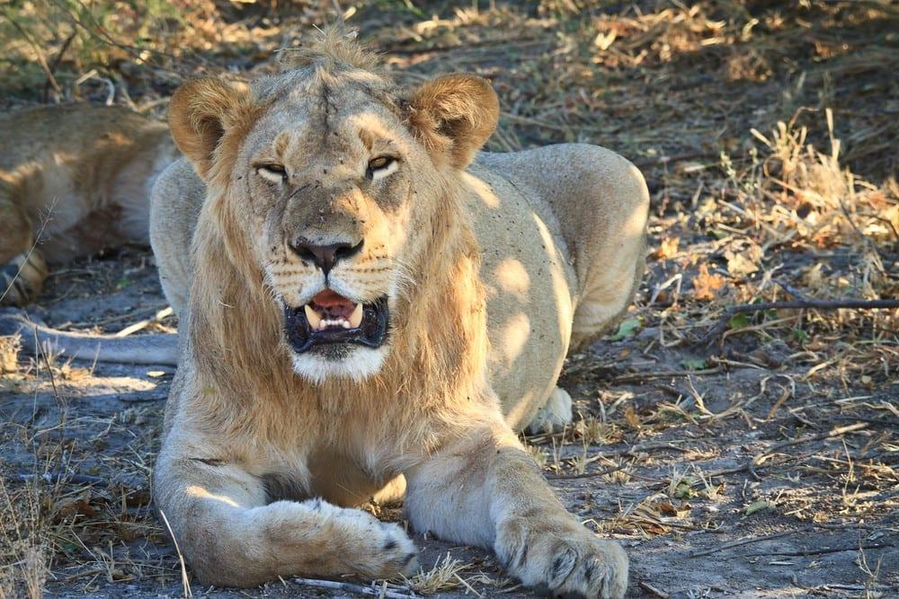 Simbabwe & Botswana - Raubkatzen & Victoriafälle 6