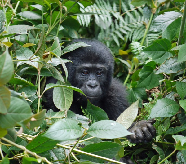 Uganda 9