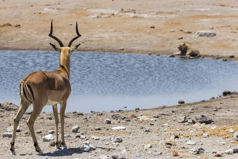 Namibia - die 3 Säulen von Namibia 10
