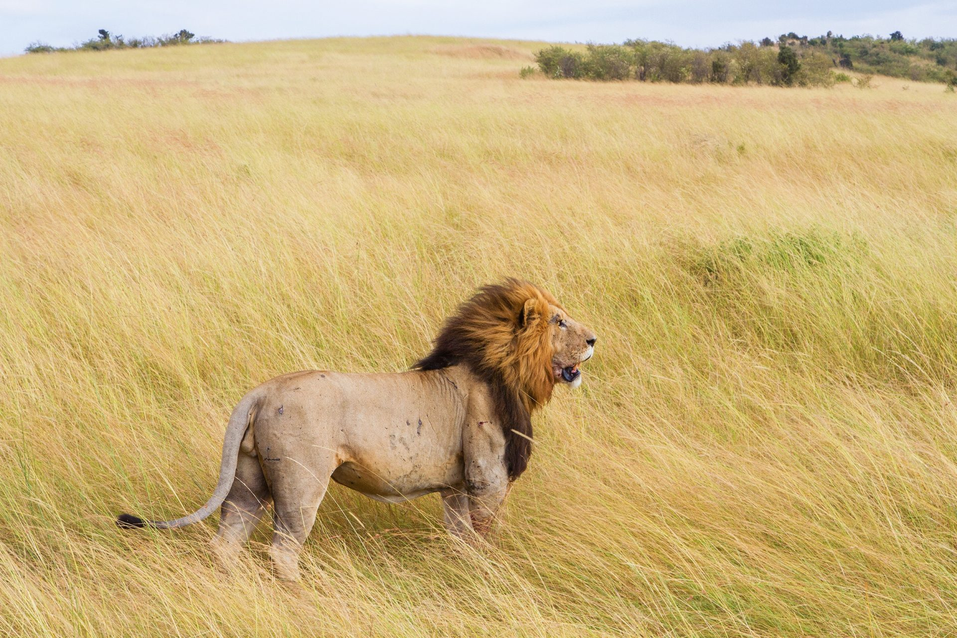 South Africa – 14 Days Coast to Kruger 16