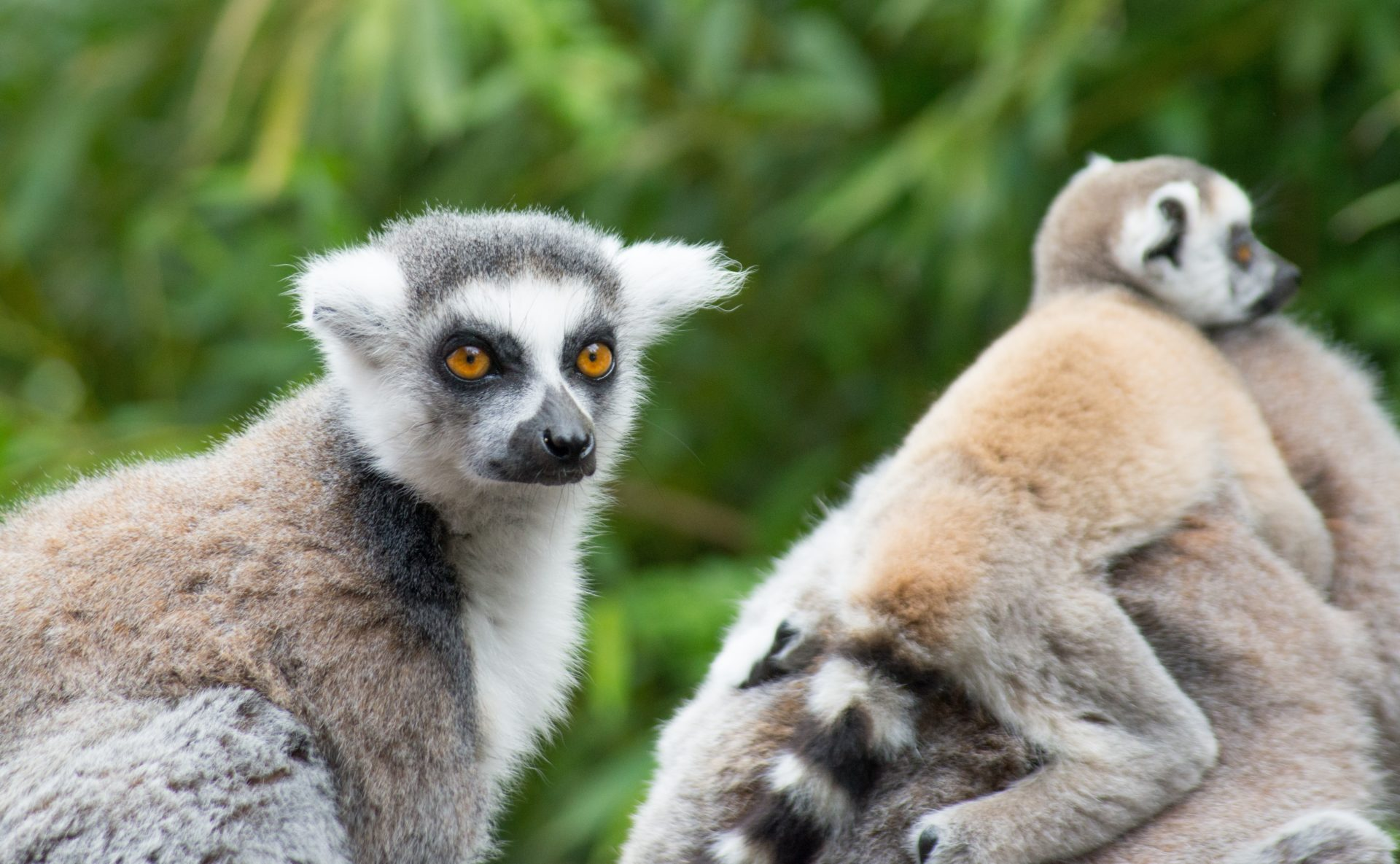 Madagaskar - Welt der Wunder 5