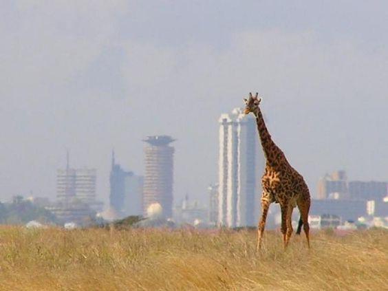 Boomender E-Commerce in Afrika 4