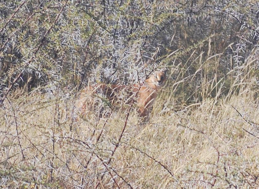38 Remarkable Wildlife Encounters in Africa 7
