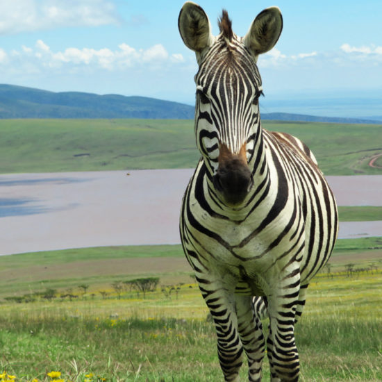 38 Remarkable Wildlife Encounters in Africa 1