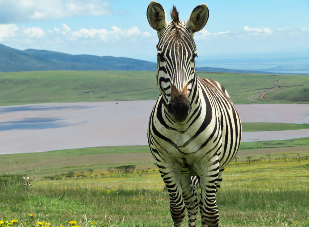 38 Remarkable Wildlife Encounters in Africa 3