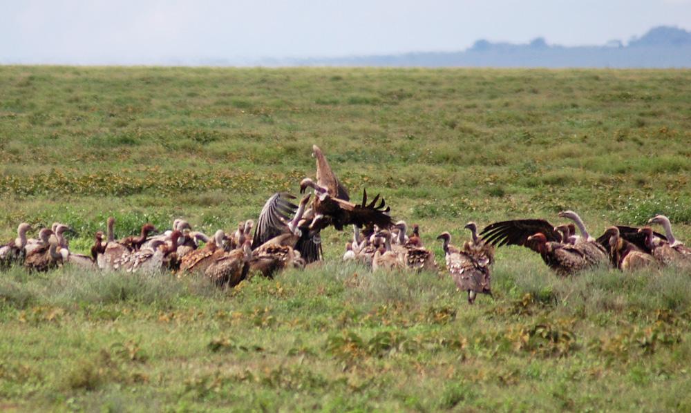 38 Remarkable Wildlife Encounters in Africa 31