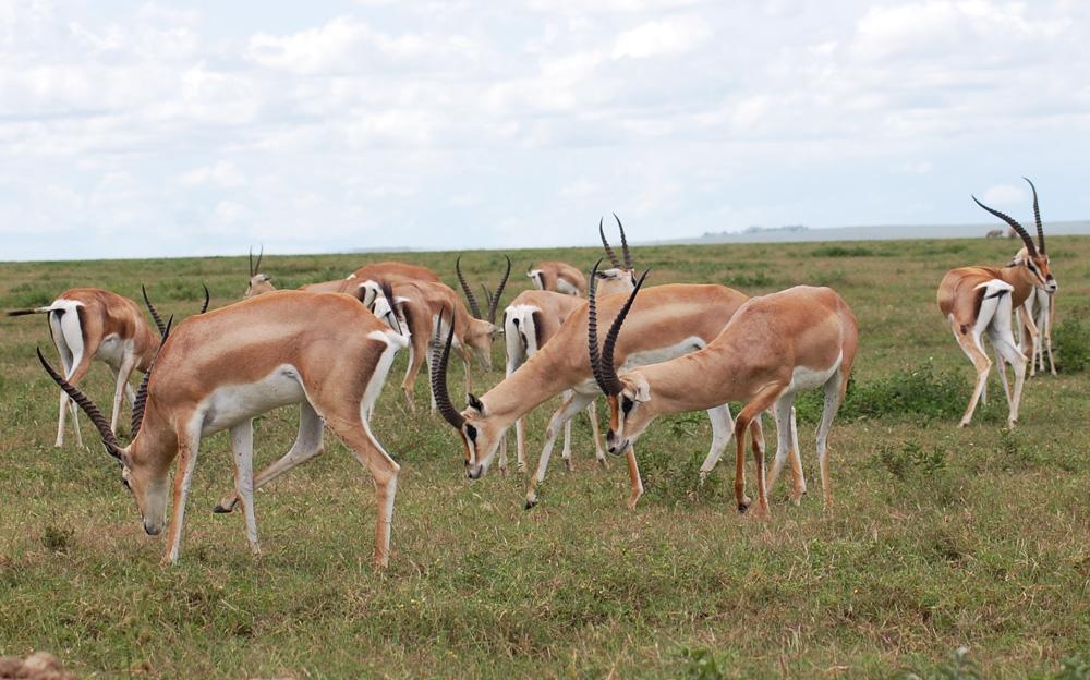 38 Remarkable Wildlife Encounters in Africa 23