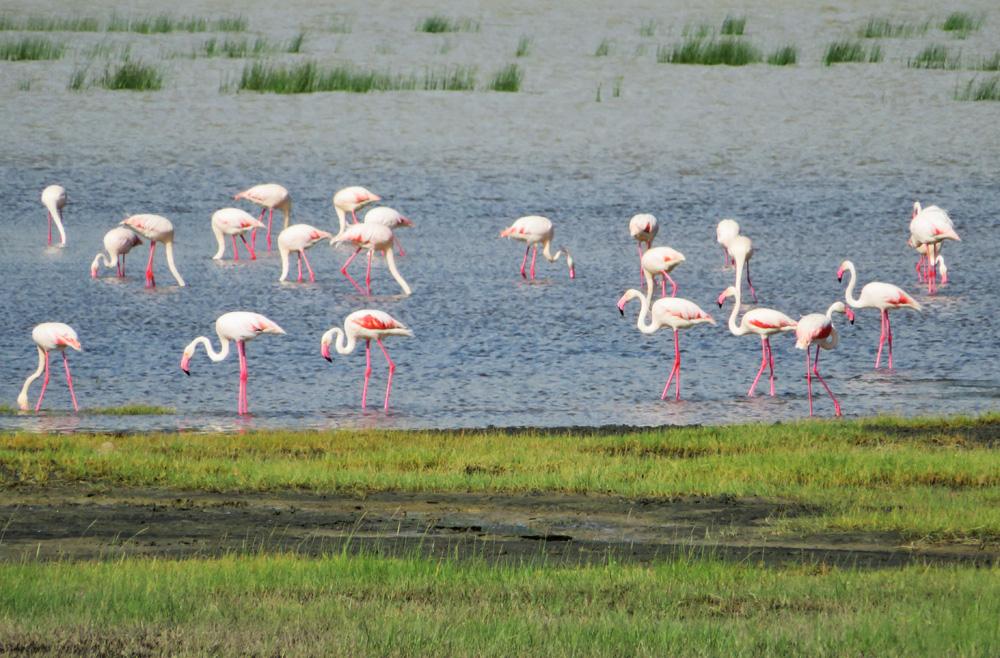 38 Remarkable Wildlife Encounters in Africa 18