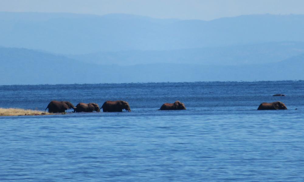 38 Remarkable Wildlife Encounters in Africa 36