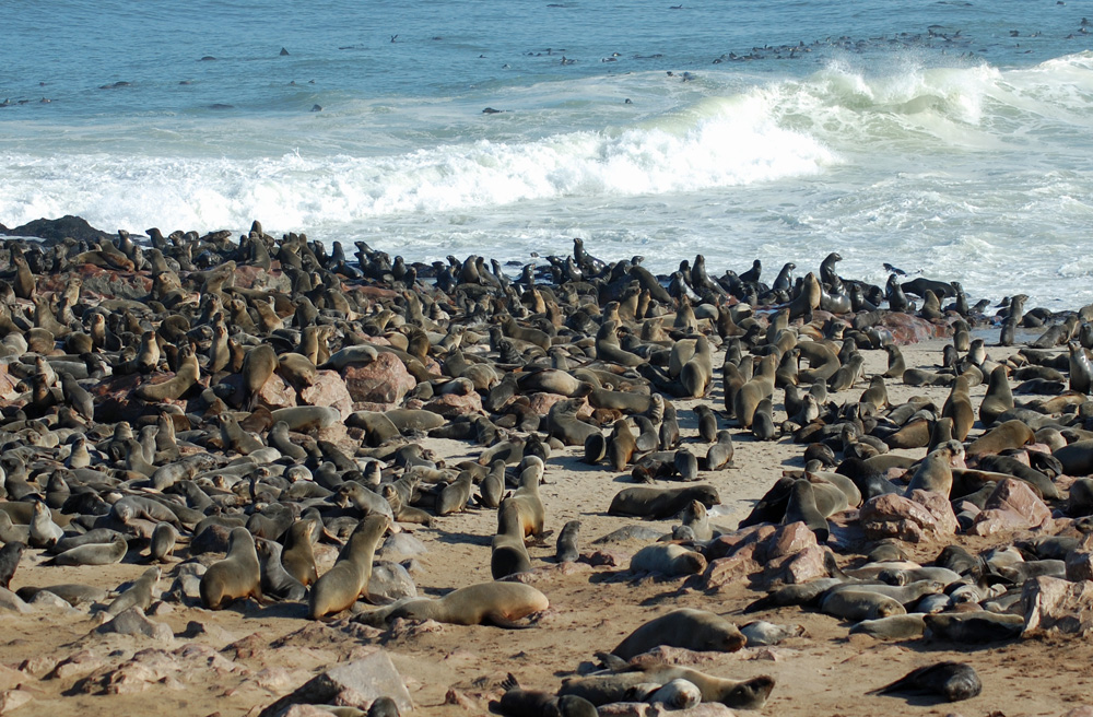 38 Remarkable Wildlife Encounters in Africa 35