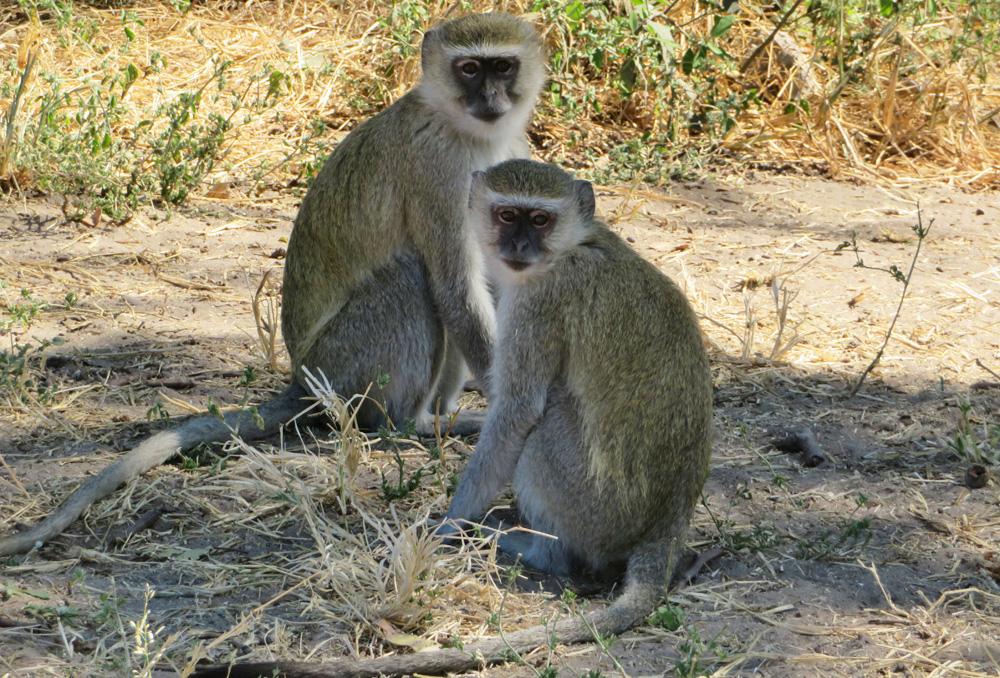 38 Remarkable Wildlife Encounters in Africa 4