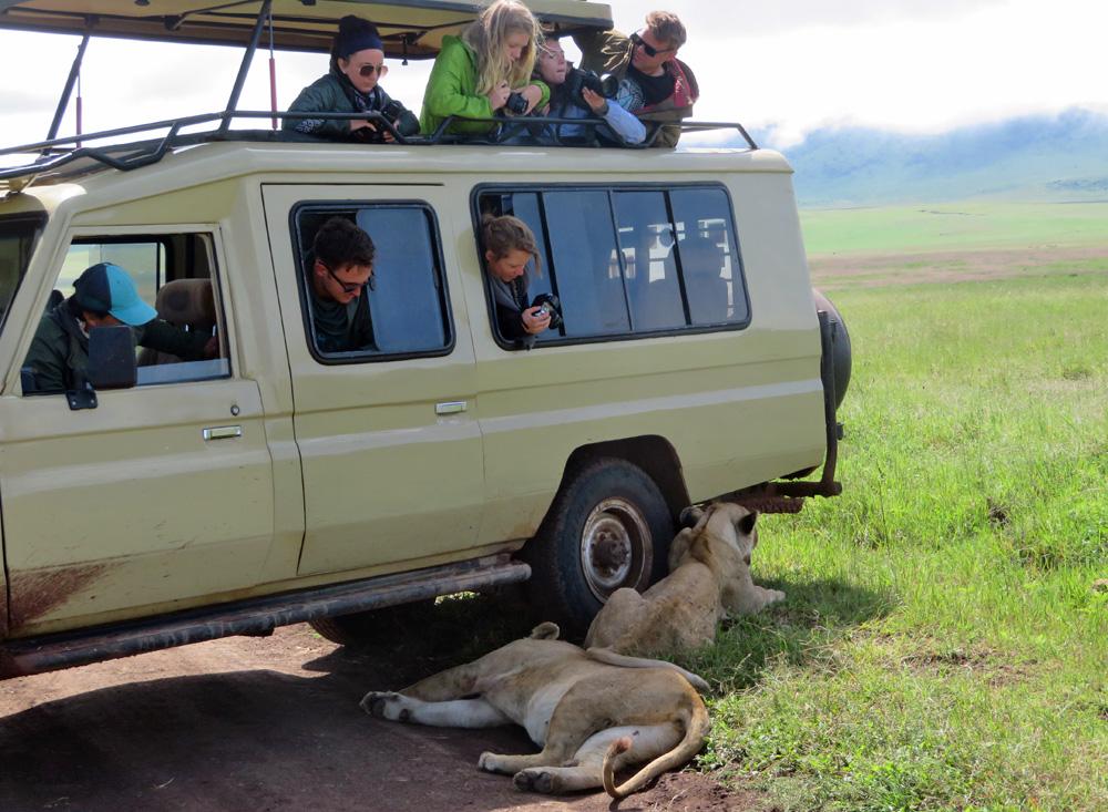 38 Remarkable Wildlife Encounters in Africa 38