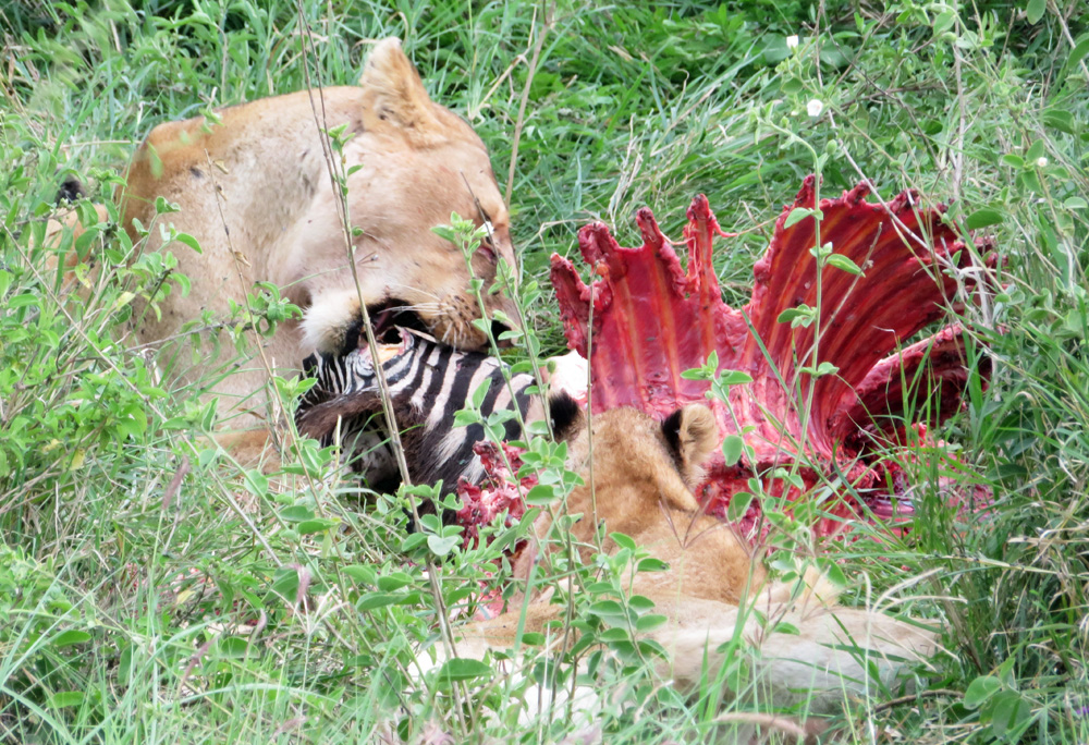 38 Remarkable Wildlife Encounters in Africa 41