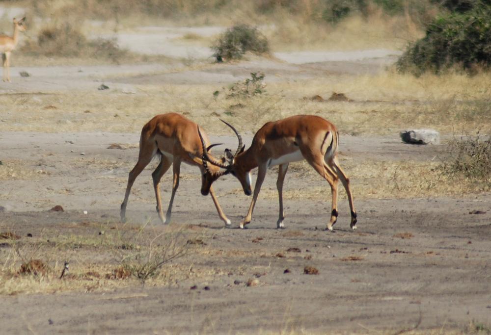 38 Remarkable Wildlife Encounters in Africa 24