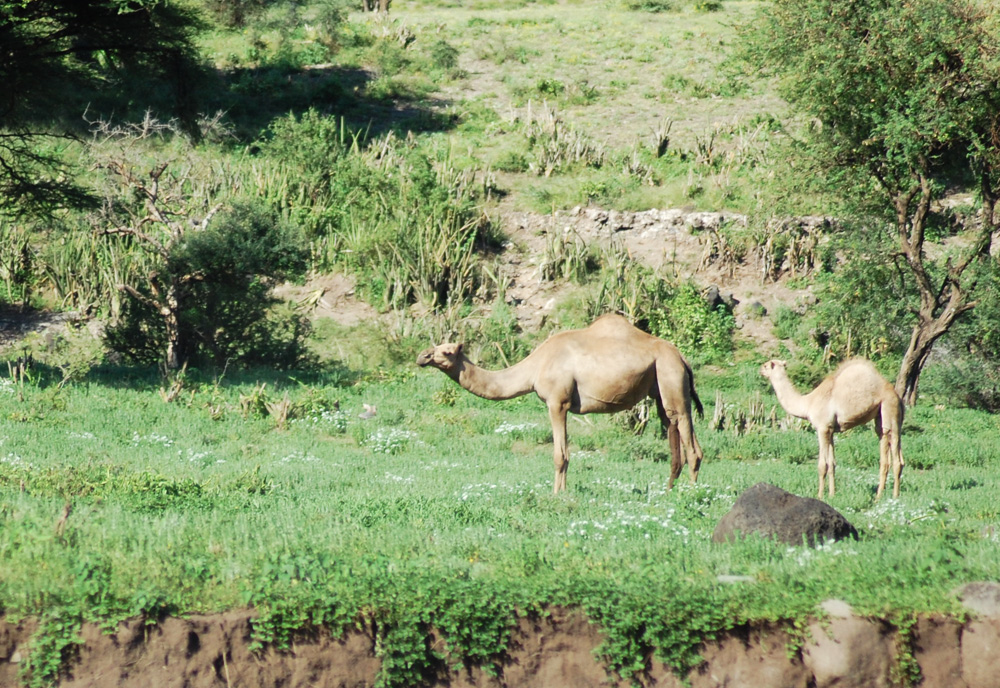38 Remarkable Wildlife Encounters in Africa 17