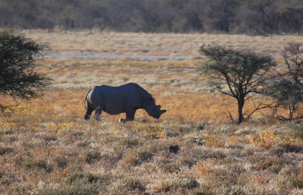 38 Remarkable Wildlife Encounters in Africa 27