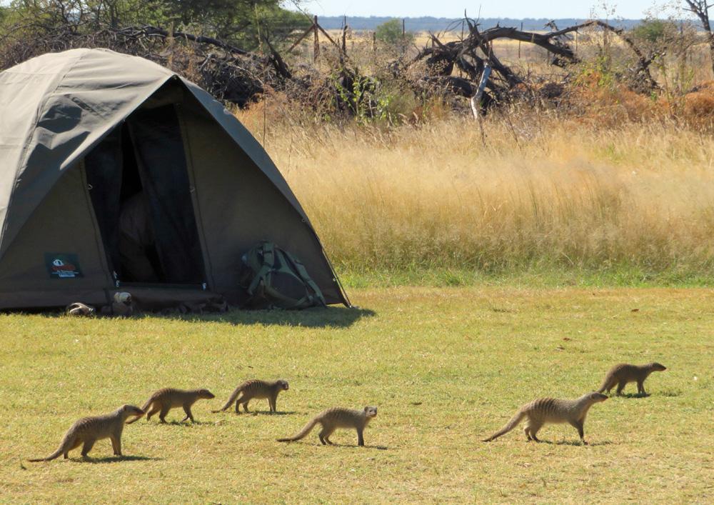 38 Remarkable Wildlife Encounters in Africa 19