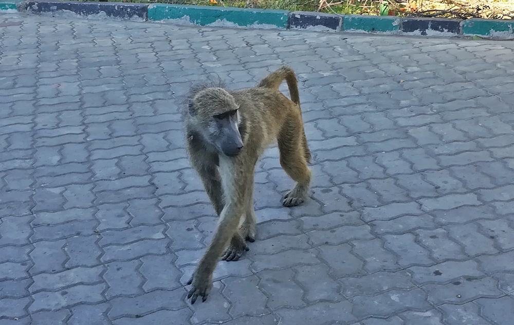 38 Remarkable Wildlife Encounters in Africa 12
