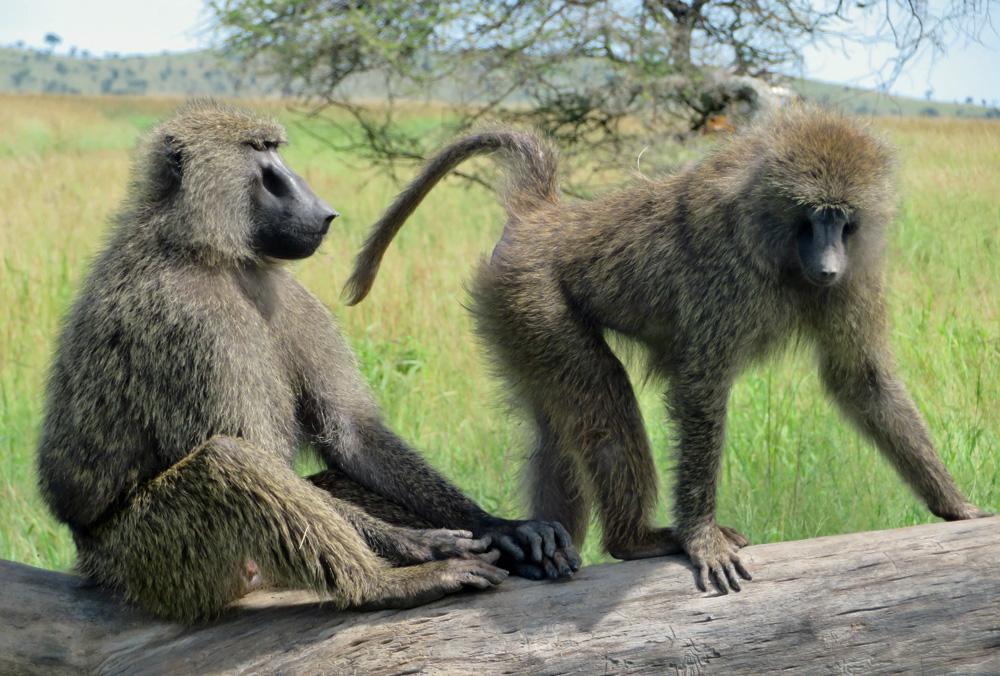 38 Remarkable Wildlife Encounters in Africa 21