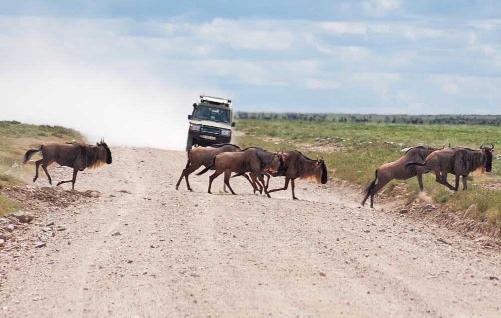 38 Remarkable Wildlife Encounters in Africa 9
