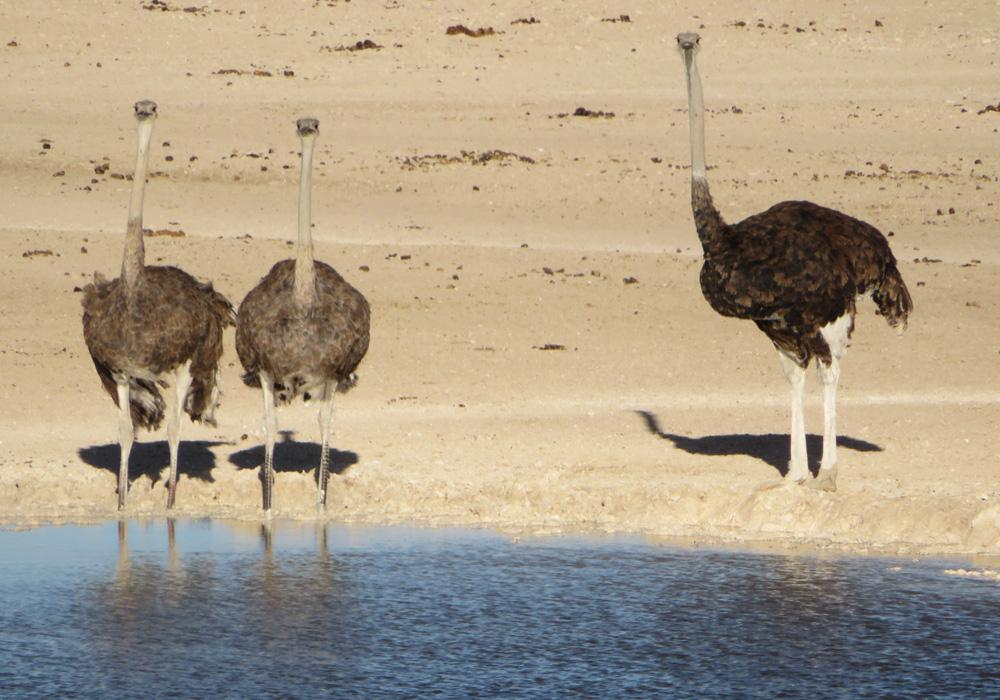 38 Remarkable Wildlife Encounters in Africa 14