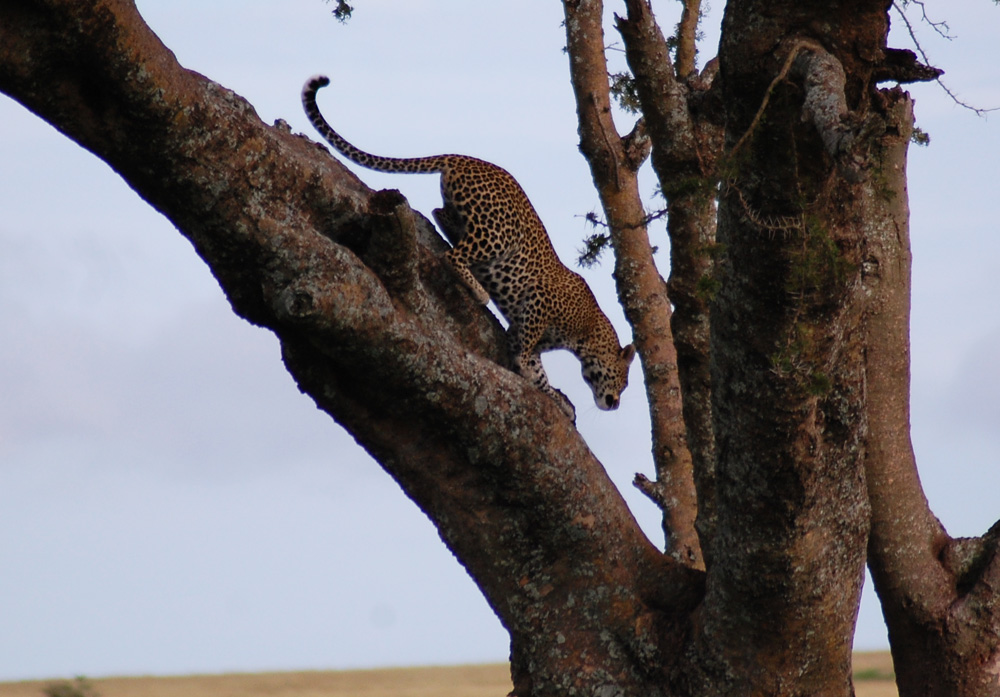 38 Remarkable Wildlife Encounters in Africa 42