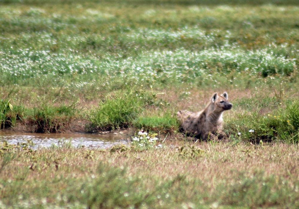 38 Remarkable Wildlife Encounters in Africa 33
