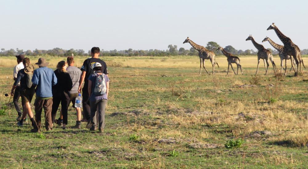 38 Remarkable Wildlife Encounters in Africa 22