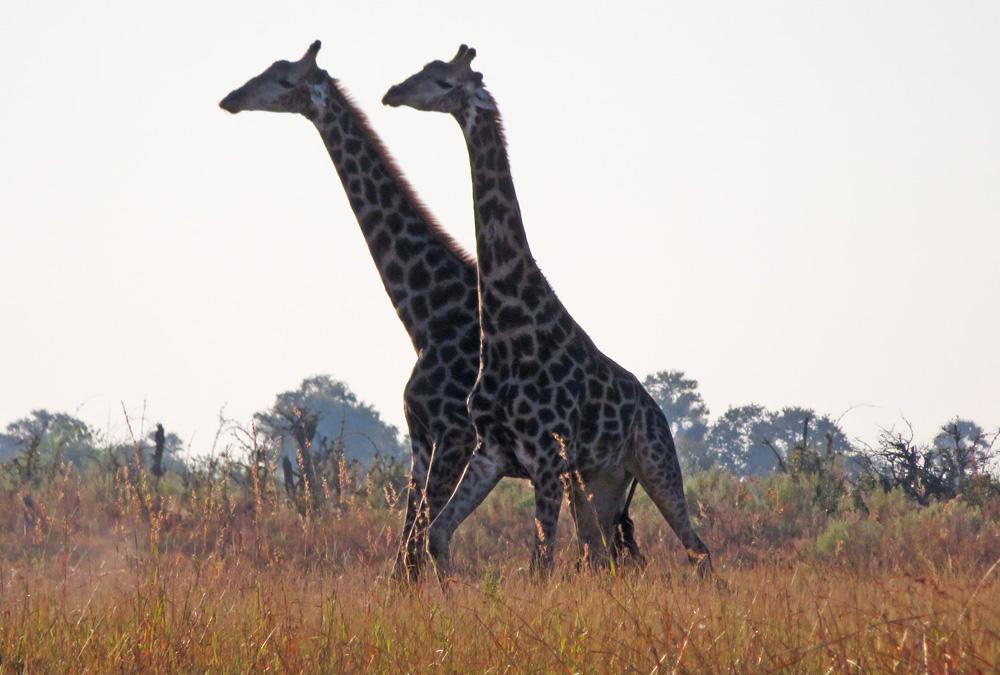 38 Remarkable Wildlife Encounters in Africa 44
