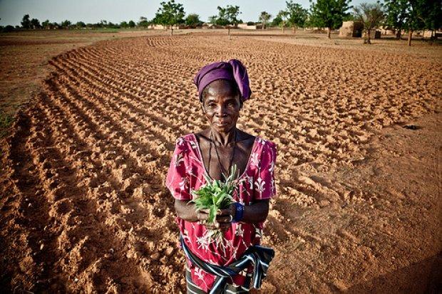 Globale Erwärmung: Extreme Auswirkungen auf Afrika 5